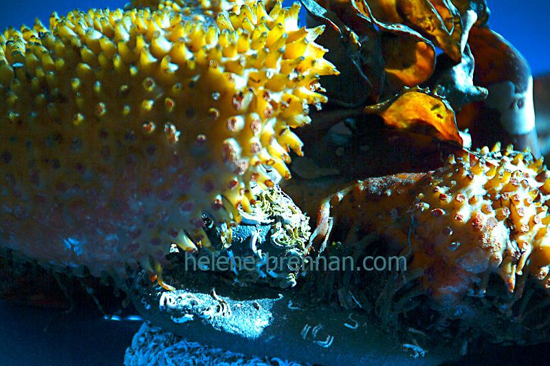 seaweed 011