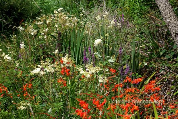 DSC_9201 wildflowers