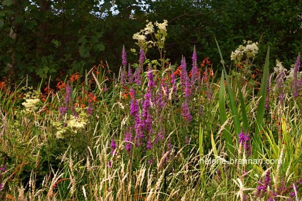 DSC_9227 wildflowers