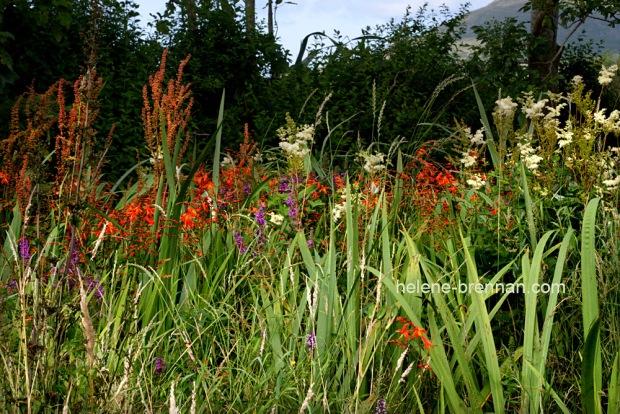 DSC_9228 wildflowers