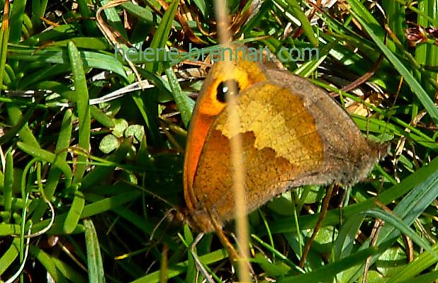 DSCF0071 butterfly