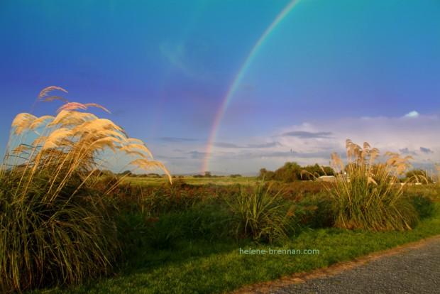 rainbow-2_edited-2