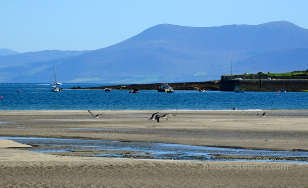 DSC_9549 ventry cuan birds