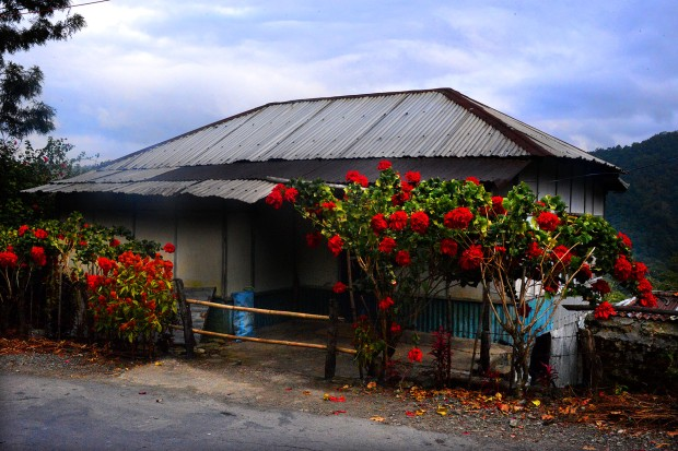 DSC_1139 poinsettia house