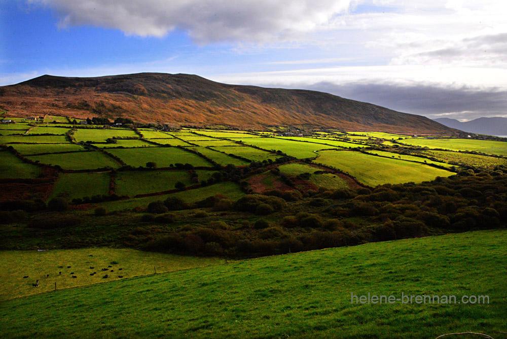 DSC_0206 green fields dingle road