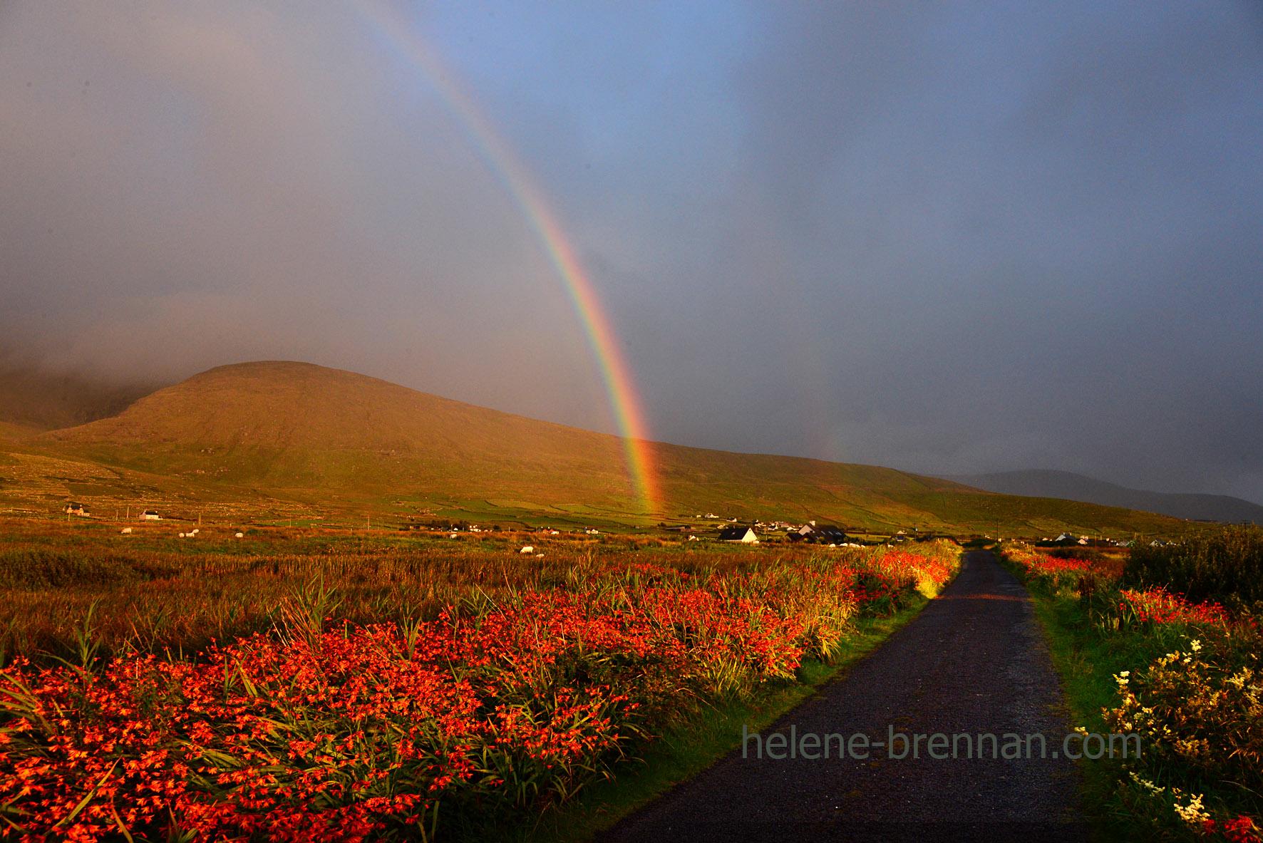 DSC_1574 cuas rainbow and wildflowers