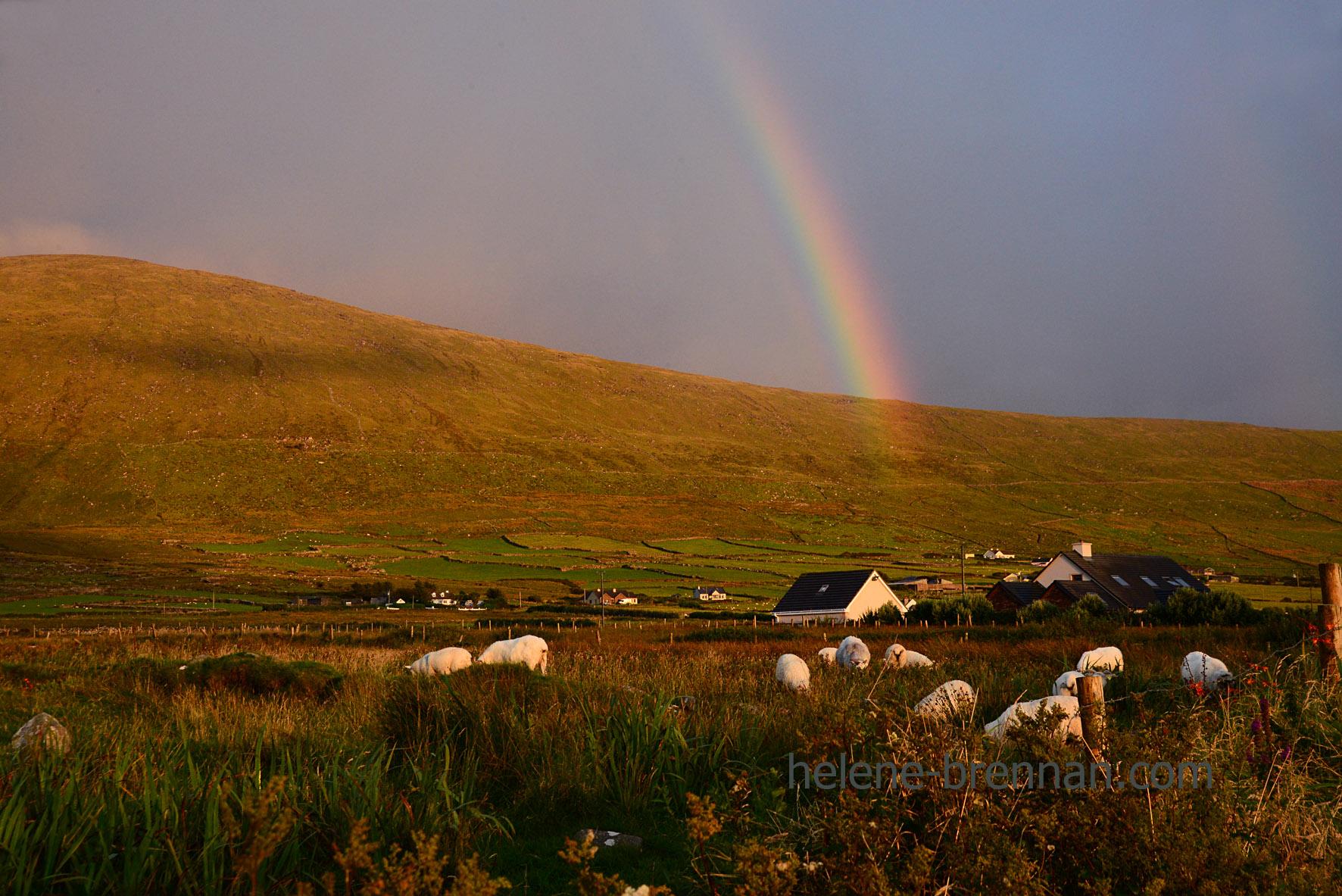DSC_1578 cuas rainbow