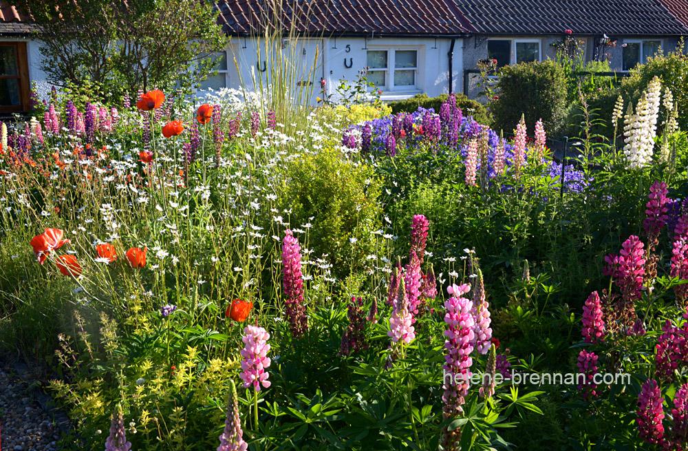DSC_8786 cottage gardens
