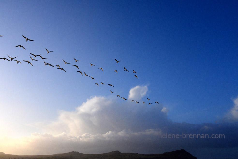 DSC_2078 birds at ballinrannig