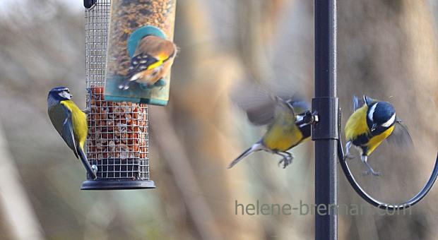 DSC_0296 birds