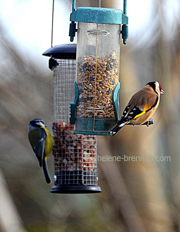 DSC_0302 birds