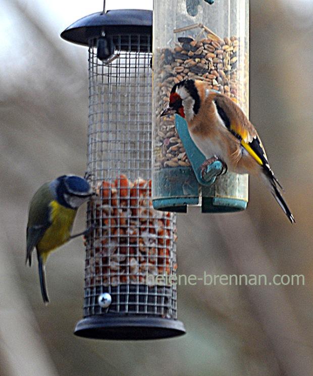 DSC_0305 birds