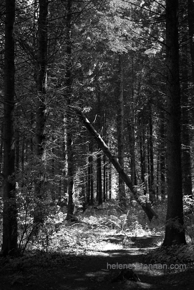 DSC_8699 forest bw