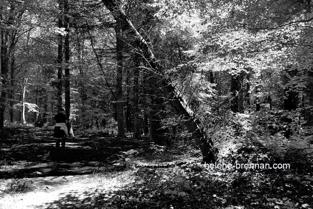 DSC_8705 forest bw 2