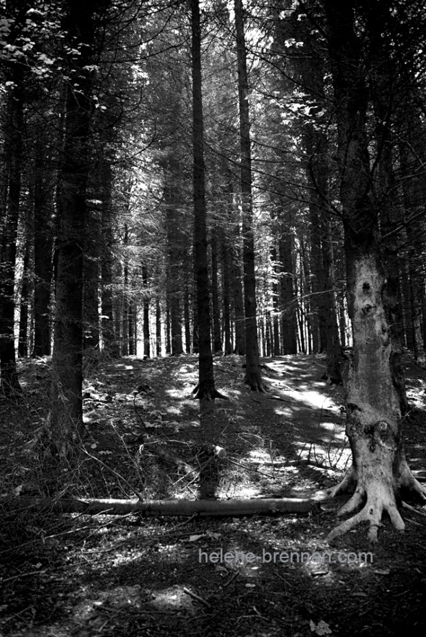 DSC_8707 forest bw 2