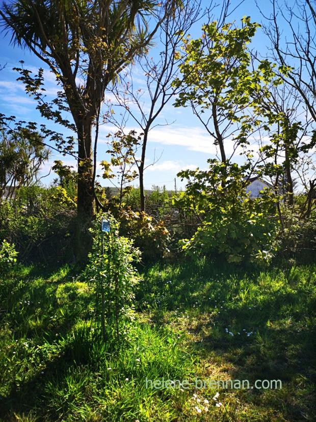 garden_151638