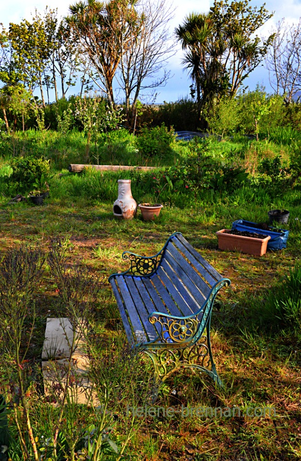 DSC_2942 garden