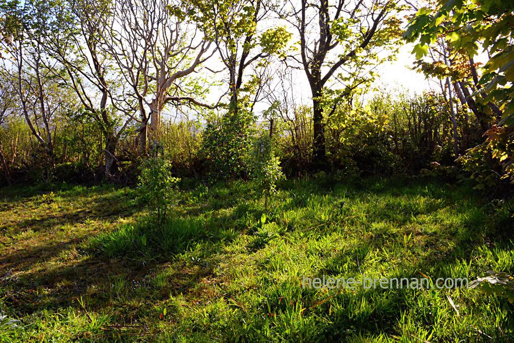 DSC_2948 garden