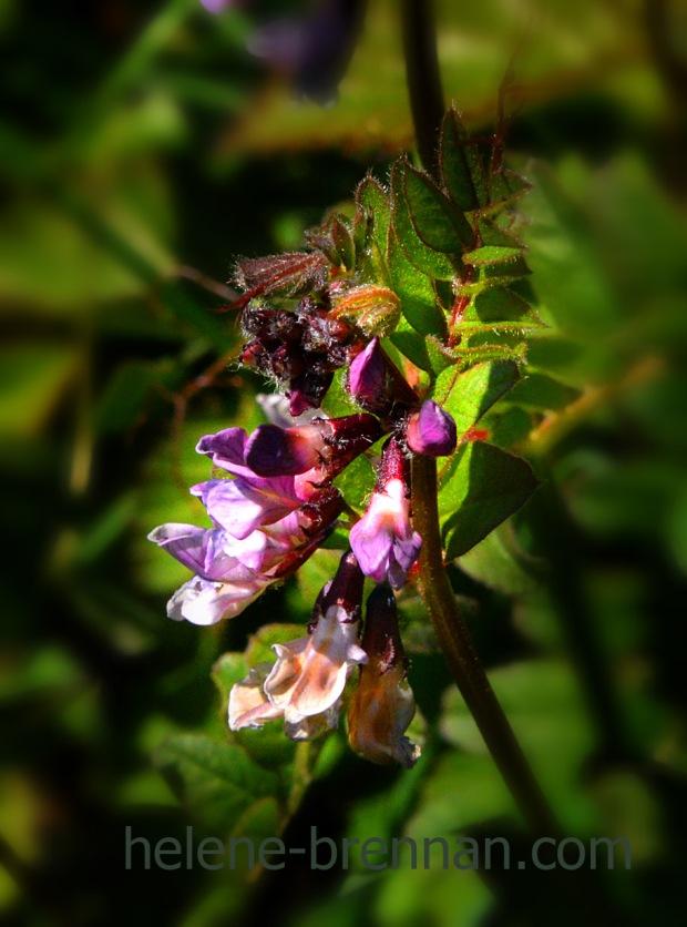 DSC_3006 flower