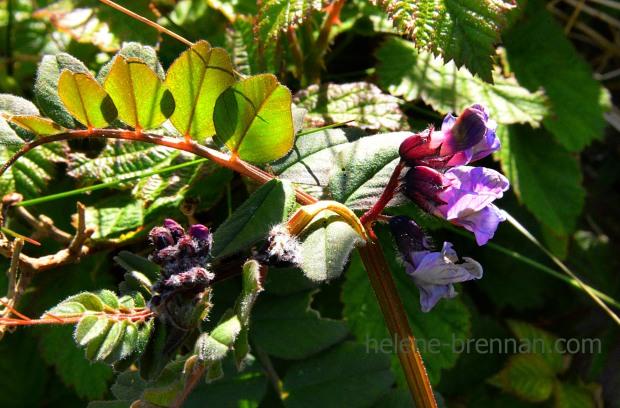 DSC_3261 wild flowers