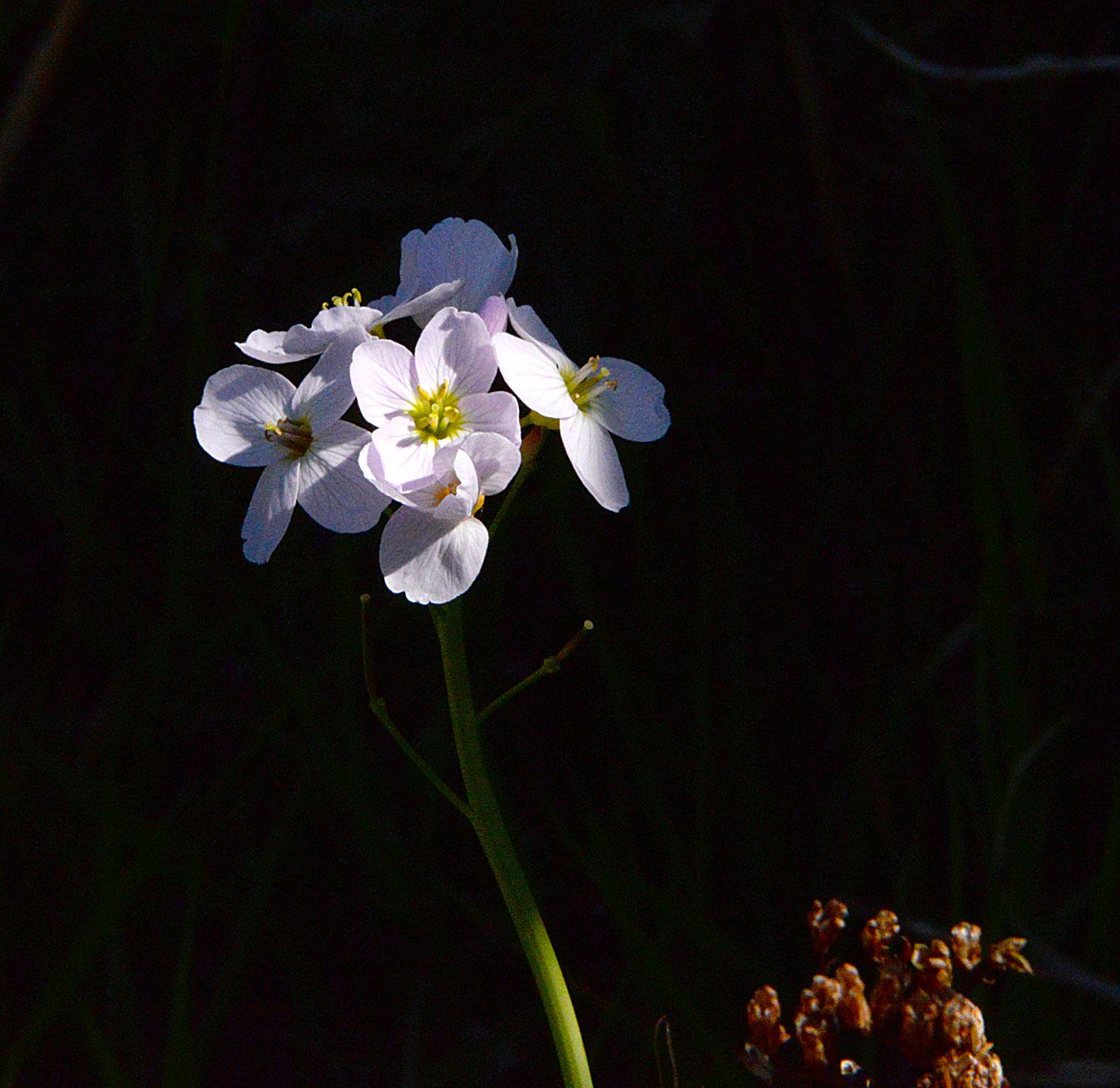 DSC_3265 wildflower