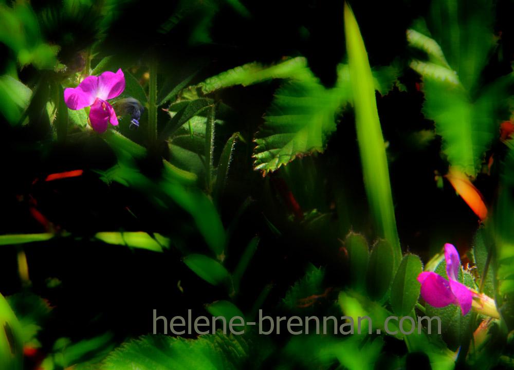 DSC_3352 wild flowers
