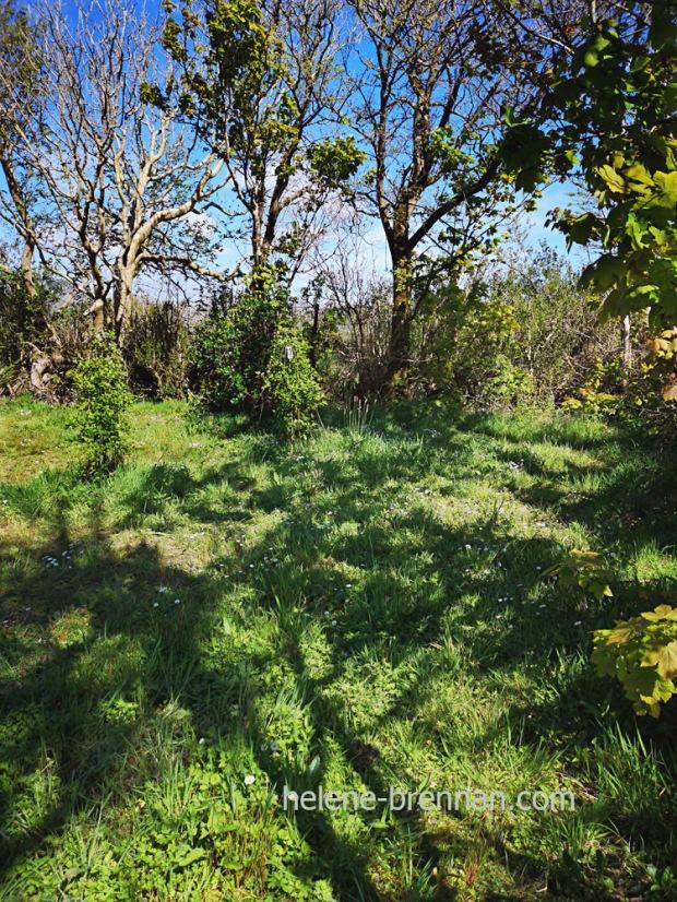 garden_151553