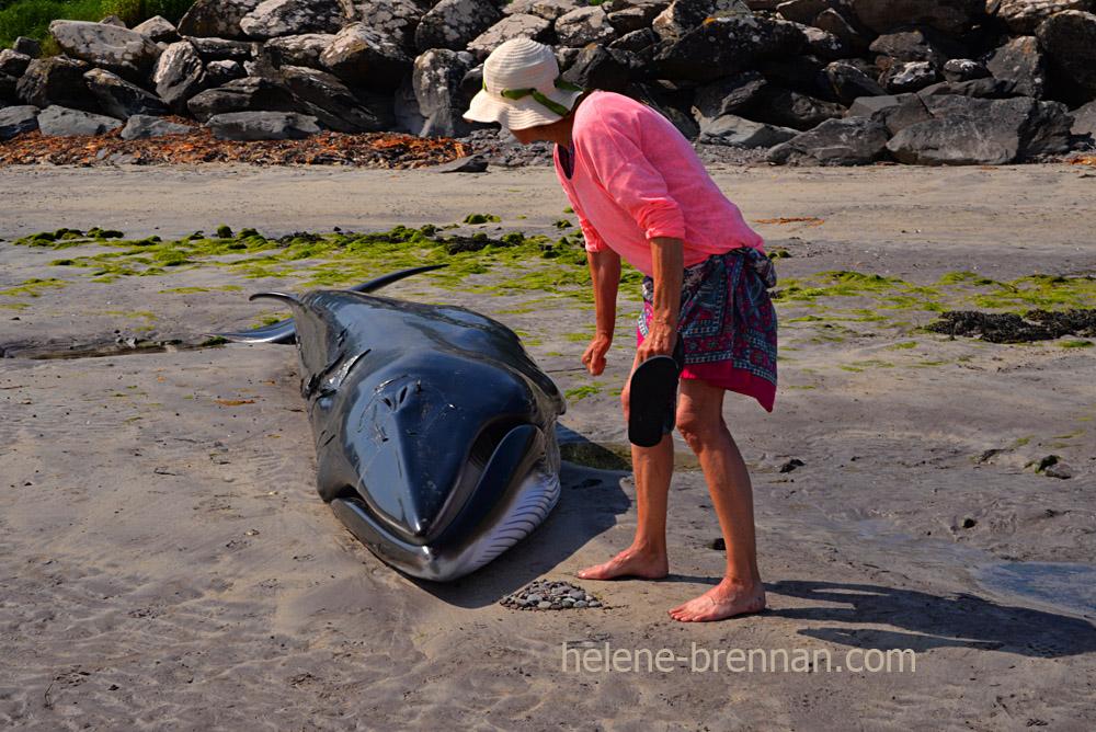 DSC_4043 whale ventry beach