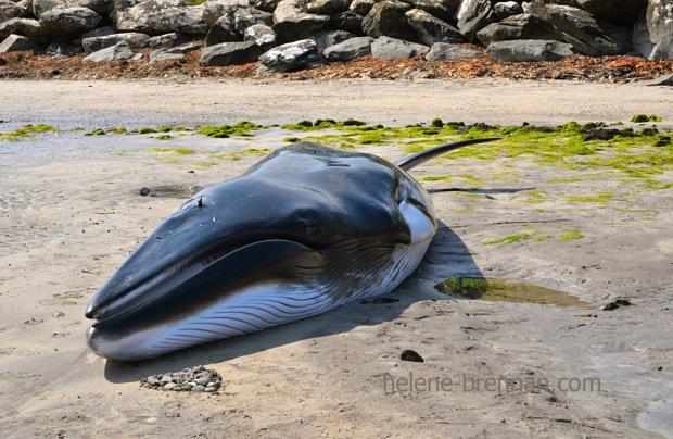 DSC_4044 whale ventry beach