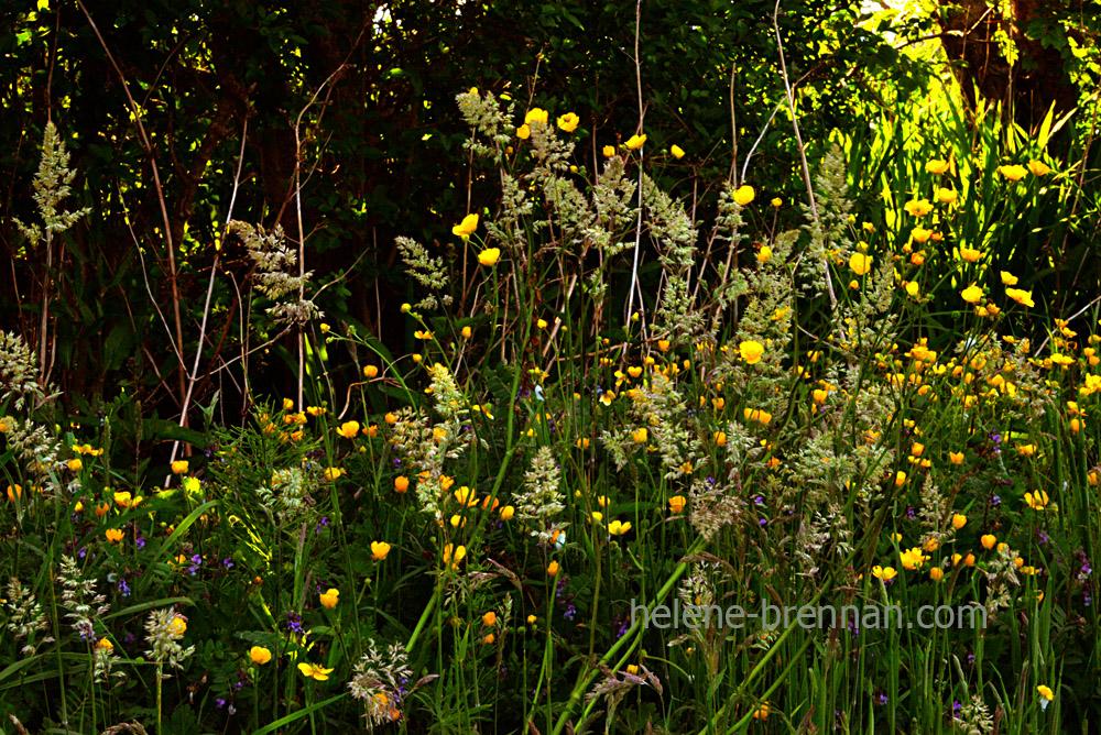DSC_4101 wildflowers