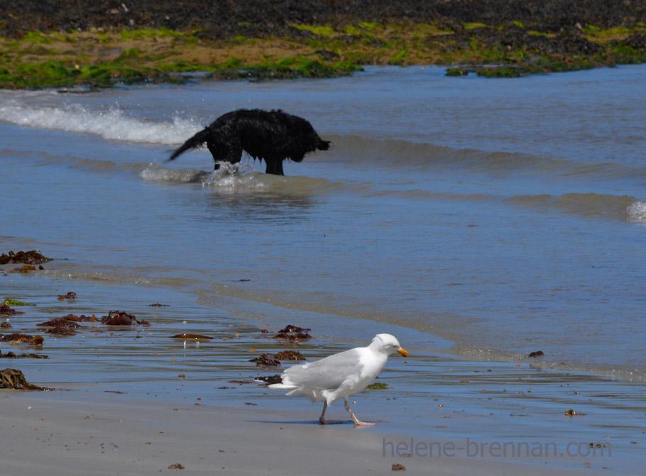 dog and gull_4462