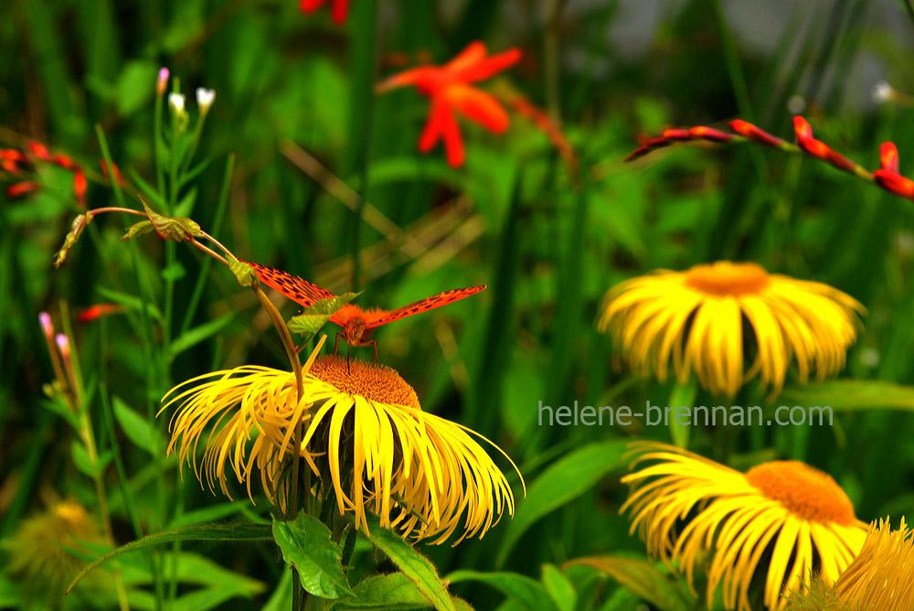 cottage garden_4898