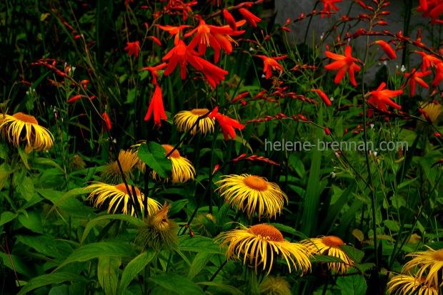 cottage garden_4905