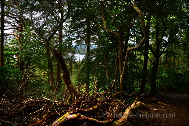 forest_4826
