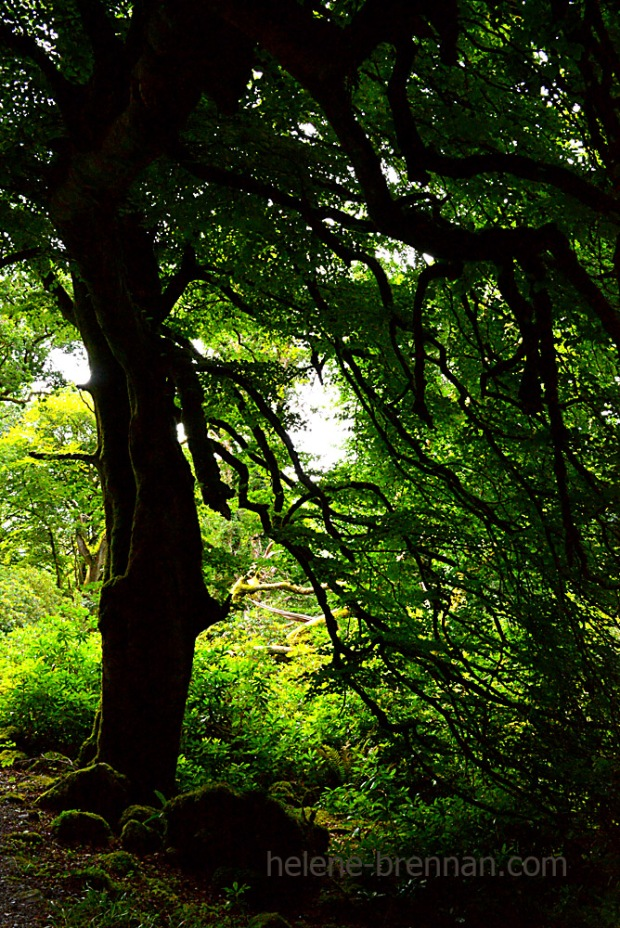 forest_4859