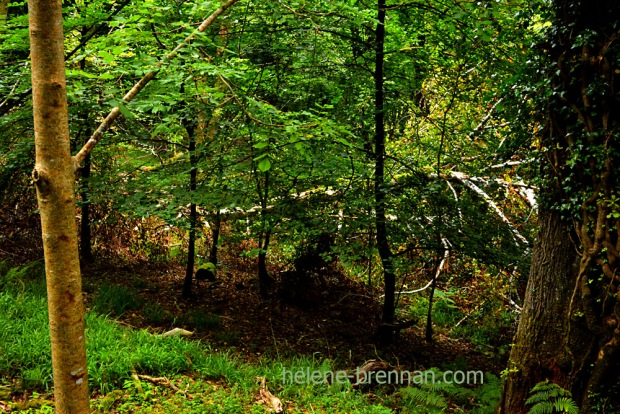 forest_4878