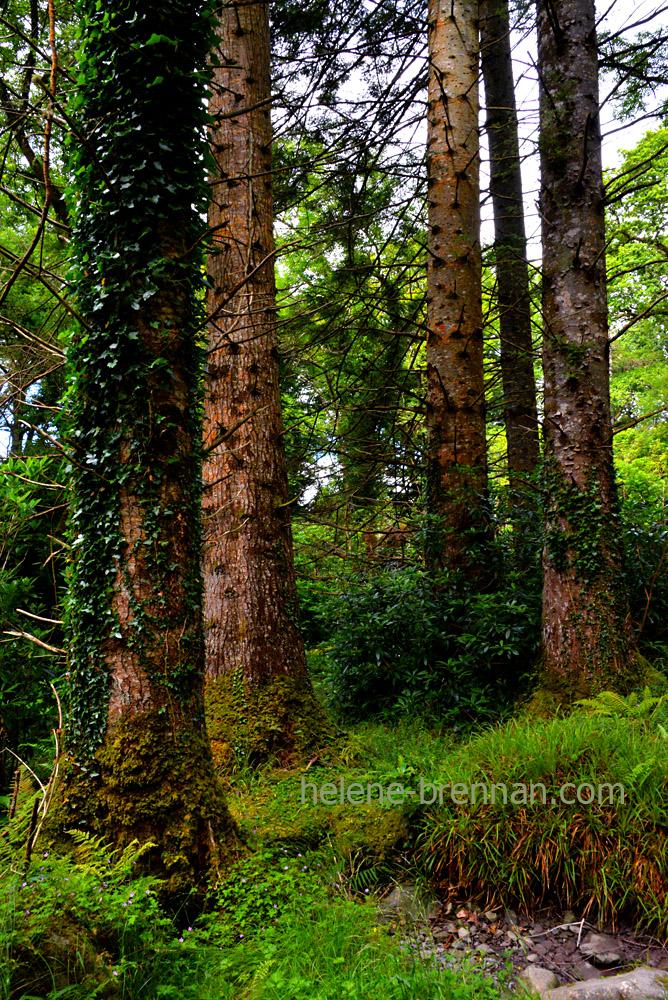 muckross arboretum_4854