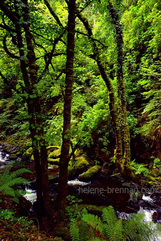 owengarrif river_4815