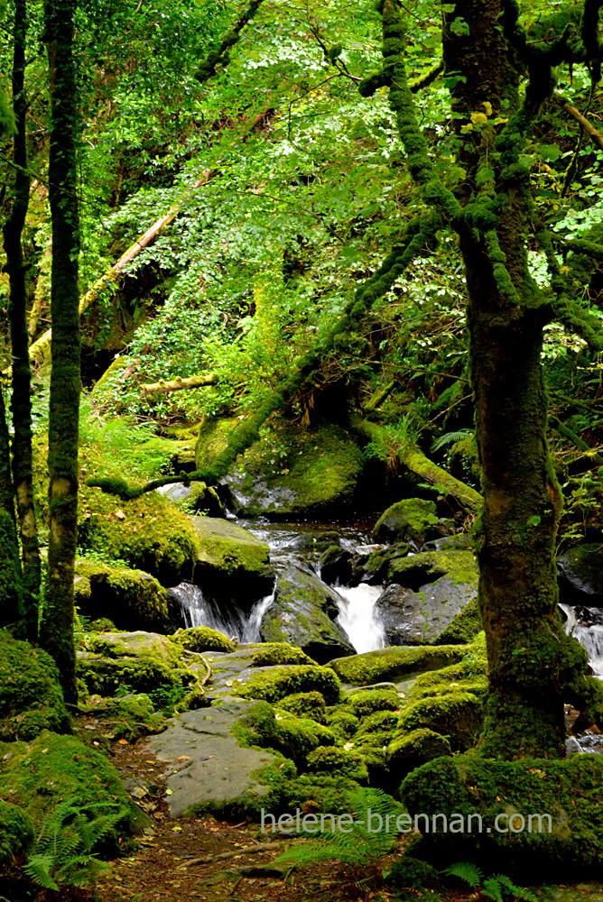 owengarrif river_4819